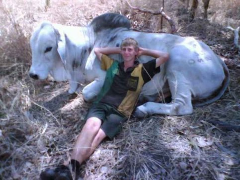 Nathan and Tony the Grey Brahman bull